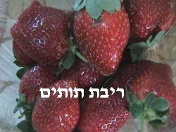 ריבת תותים                             יונייטד מתכונים