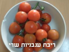 ריבת עגבניות שרי- מאסטר מתכונים